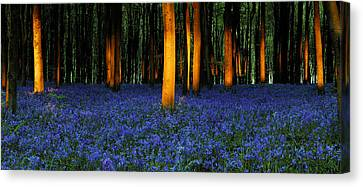 Natures Carpet  Canvas Print by John Chivers