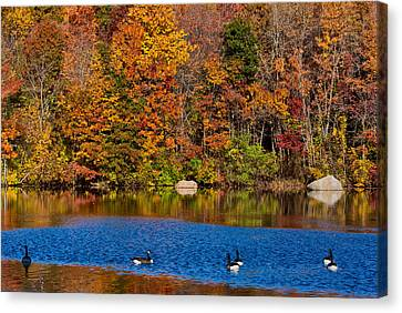 Natures Colorful Autumn Canvas Print by Karol Livote