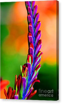 Nature's Colors Canvas Print by Tap On Photo