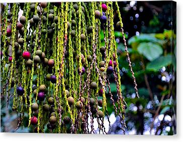 Canvas Print featuring the photograph Nature's Dreadlocks by Zafer Gurel