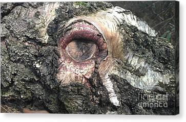 Natures Eye  Canvas Print by Tom Salt