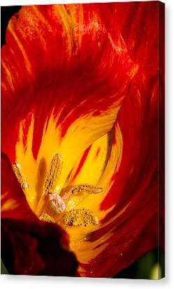 Nature's Flame Canvas Print