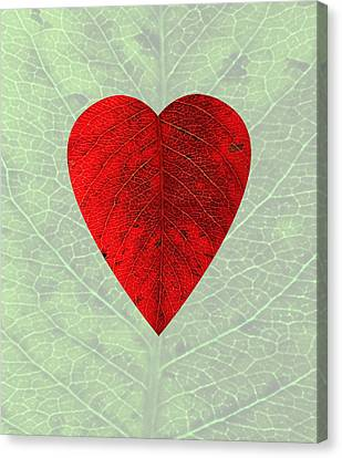 Nature's Heart Canvas Print by Deborah Smith