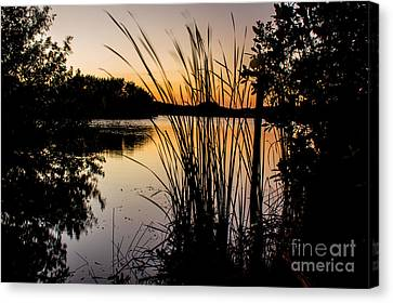Natures Hidden Beauty Canvas Print by Rene Triay Photography