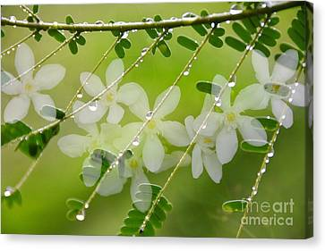 Canvas Print featuring the photograph Nature's Jewelry by Darla Wood