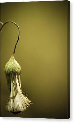 Nature's Little Lamp Canvas Print