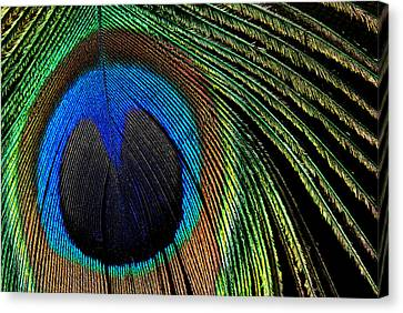 Canvas Print featuring the photograph Nature's Loom by Lorenzo Cassina