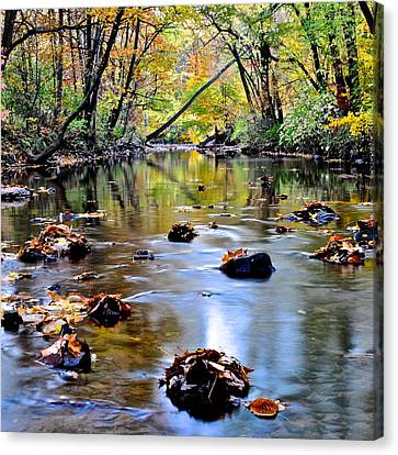 Natures Mood Lighting Canvas Print by Frozen in Time Fine Art Photography