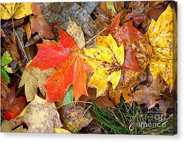 Canvas Print featuring the photograph Nature's Palette by Jim McCain