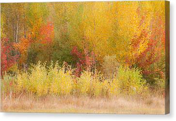 Canvas Print featuring the photograph Nature's Palette by Paul Miller