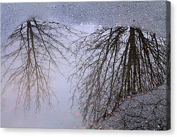 Canvas Print featuring the photograph Nature's Reflection  by Candice Trimble