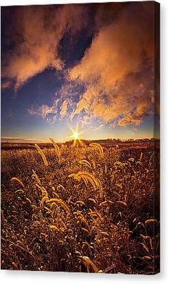 Nature's Romm With A View Canvas Print by Phil Koch