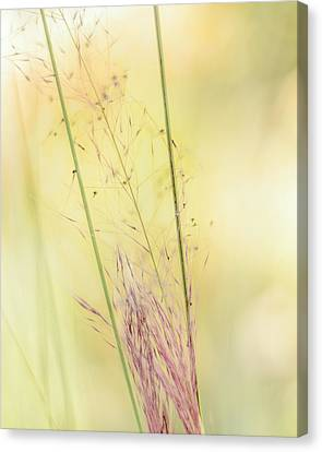 Natures Serenity Canvas Print by Camille Lopez