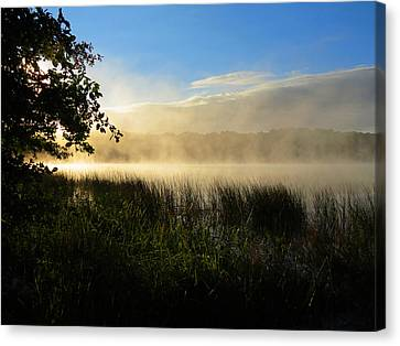 Nature's Way Canvas Print by Dianne Cowen