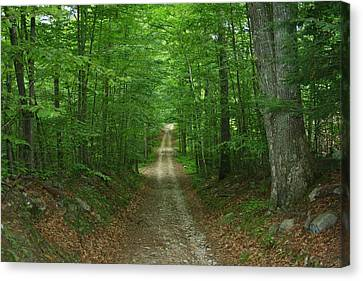 Nature's Way At James L. Goodwin State Forest  Canvas Print by Neal Eslinger