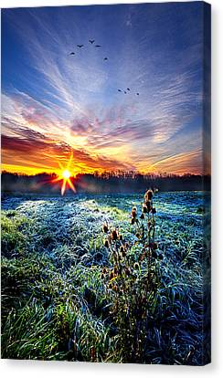 Nature's Way Canvas Print by Phil Koch