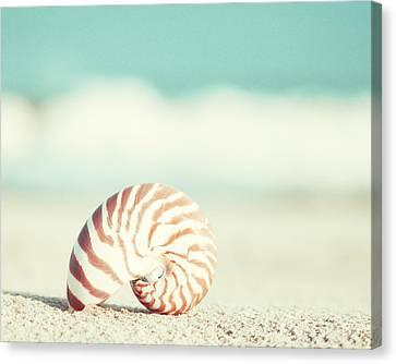 Nautilus Canvas Print by Carolyn Cochrane