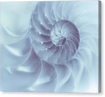 Seashell Canvas Print - Nautilus - Dreaming Of The Sea by Tom Mc Nemar