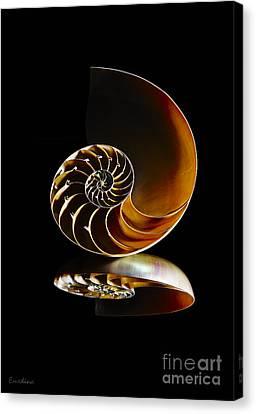 Nautilus Reflection II Canvas Print by Eyzen M Kim