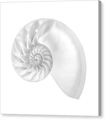 Nautilus Shell Interior Canvas Print by Jim Hughes