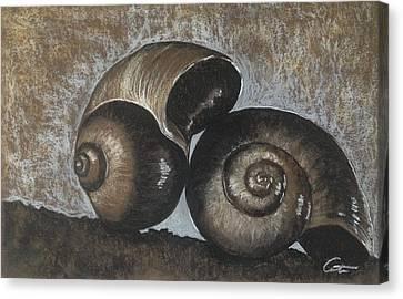 Nautilus Shells In Sepia Canvas Print