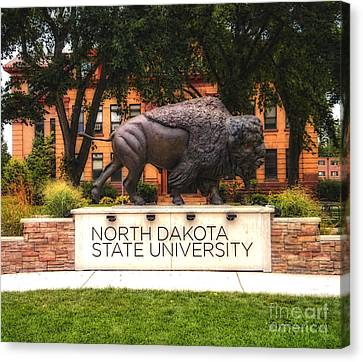 Ndsu Bison Canvas Print by Trey Foerster