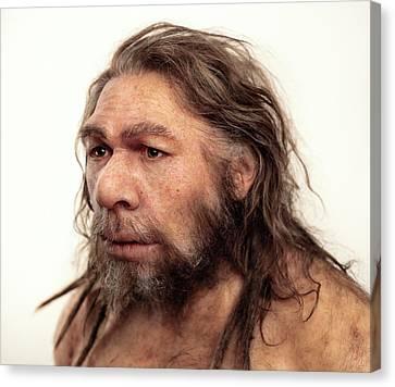 Neanderthal Model Canvas Print by S. Entressangle/e. Daynes