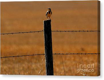 Nebraska's Bird Canvas Print by Elizabeth Winter