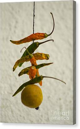 Neembu Mirch  Lemon N Chillies Canvas Print by Vineesh Edakkara