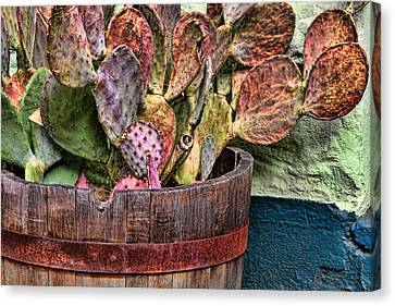 Canvas Print featuring the photograph Neglect by Beverly Parks