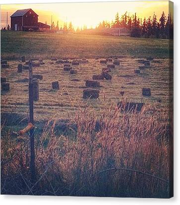 Neighboring Farm At Sunset...have A Canvas Print by Blenda Studio