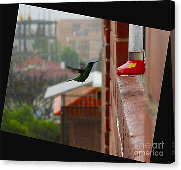 Neither Rain Nor Sleet  Canvas Print