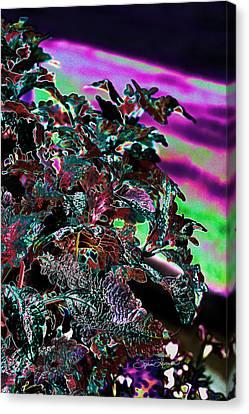 Dean Russo Canvas Print - Neon Coleus by Sylvia Thornton