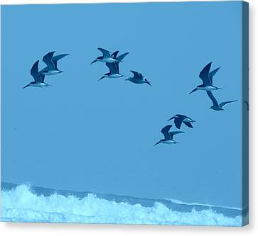 Neon Flight Canvas Print by Lew Davis