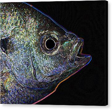 Neon Gill Canvas Print by John Crothers
