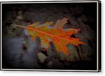Neon Leaf Afloat Canvas Print by Greg Thiemeyer