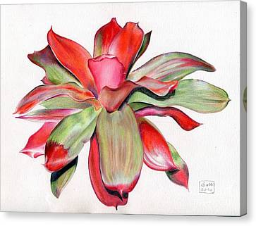 Neoregelia 'magali' Canvas Print by Penrith Goff