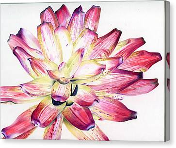 Neoregelia Picasso Canvas Print by Penrith Goff
