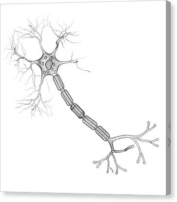 Nerve Cell Canvas Print by Pixologicstudio