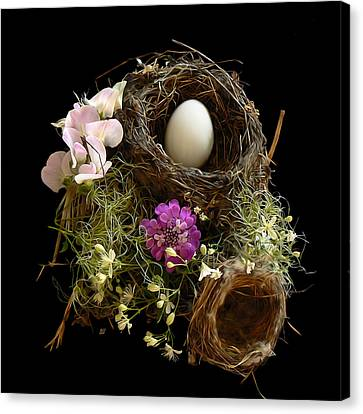 Nest Egg Canvas Print by Barbara St Jean