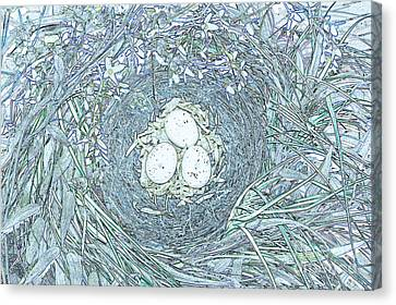 Nest Eggs By Jrr Canvas Print by First Star Art
