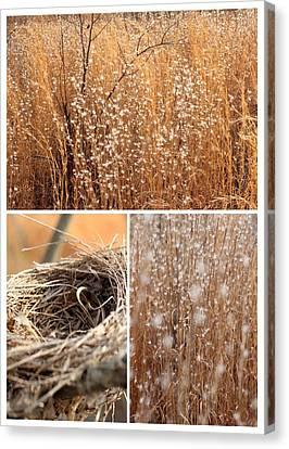 Nest Field Canvas Print by AR Annahita