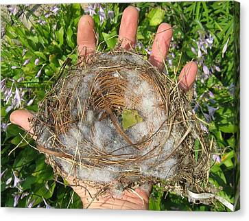 Canvas Print featuring the photograph A Nest In Hand by Bruce Carpenter