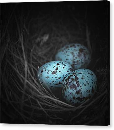 Nest Of 3  Canvas Print by Trish Mistric