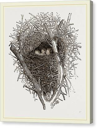 Nest Of Magpie Canvas Print by Litz Collection