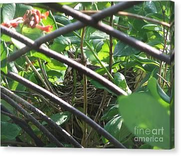 Nesting Canvas Print by Deborah DeLaBarre
