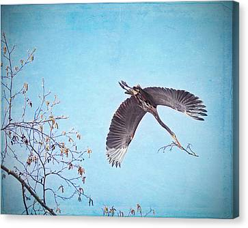 Canvas Print featuring the photograph Nesting Heron by Peggy Collins