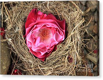 Nesting Rose Canvas Print by Jeanette French