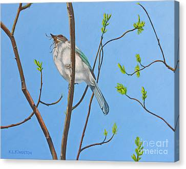Canvas Print featuring the painting Nesting Scrub Jay by K L Kingston