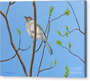 Nesting Scrub Jay Canvas Print